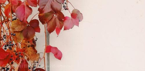红叶的梦境里,会有你吗