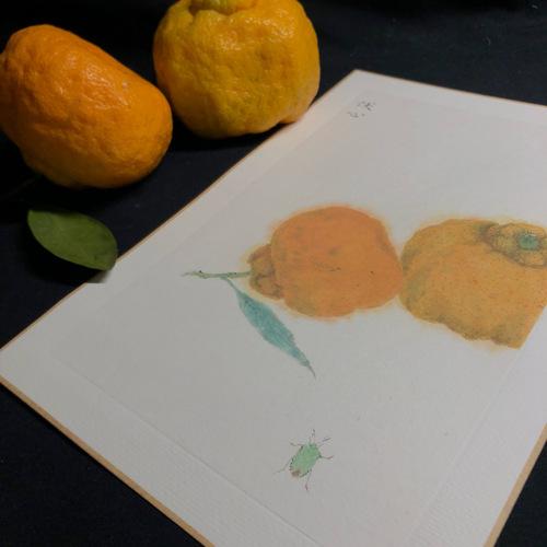 小臭虫 大丑橘