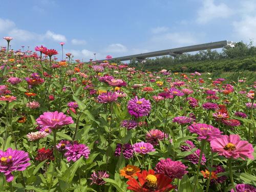 今天(昨天)是开心的花海和蓝天...